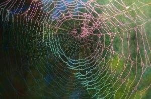 Fears - spiders web picture